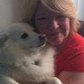 Comfy Canine Care dog boarding & pet sitting