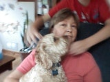 Molly's guest house dog boarding & pet sitting