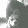 VIPets LLC dog boarding & pet sitting