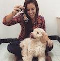 Federal Hill Dog Mama! dog boarding & pet sitting