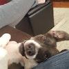 Dog Day Care Sterling Va
