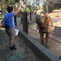 Elephant keeper that loves dogs! dog boarding & pet sitting