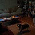 Patti's Pets dog boarding & pet sitting