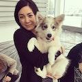 Britt's Puppy Daycare dog boarding & pet sitting