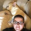KB dog boarding & pet sitting