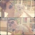 Kateryna's boarding house dog boarding & pet sitting