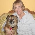 Maggie's Canine Comfort dog boarding & pet sitting