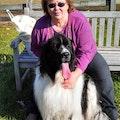 Home Alone Pet Sitting- Loving Care dog boarding & pet sitting