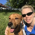 Work from Home Dog Lover dog boarding & pet sitting