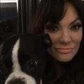 Monica's downtown dog boarding dog boarding & pet sitting
