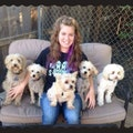 Affordable Pet Sitting And Grooming dog boarding & pet sitting
