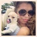 We Love dogs dog boarding & pet sitting