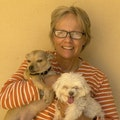 It's All About Dogs dog boarding & pet sitting