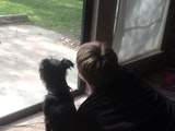 Alex's awesome dog watching dog boarding & pet sitting